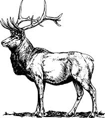 Small Picture Alpha Male Elk Coloring Pages Download Print Online Coloring
