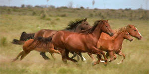 horses running. Contemporary Horses Image Is Loading WildHorsesRunning3DActionPostcardGreetingCard In Horses Running T