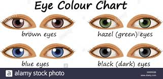Different Eye Colors Human Stock Photos Different Eye