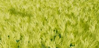 green grass field animated. Distance Fields \ Green Grass Field Animated