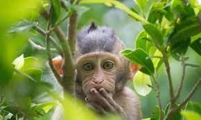 الفيروس القردي | موقع ليفانت نيوز الإخباري
