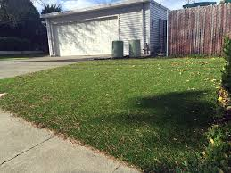 artificial grass obion tennessee