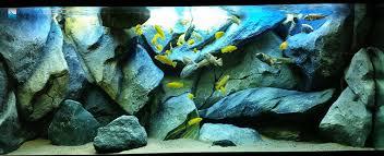 Aquarium Backgrounds Video Amazing Custom 3 D Aquarium Backgrounds
