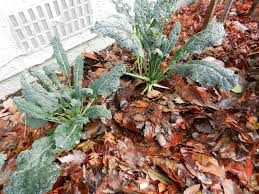 Small Picture Protecting Your Winter Vegetable Garden Russell Nursery