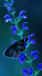 Butterfly Flower Insect Wallpaper 4K #4 ...
