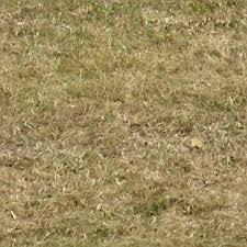 Grass Texture Seamless Grass 2094 Grass Texture Seamless Nongzico