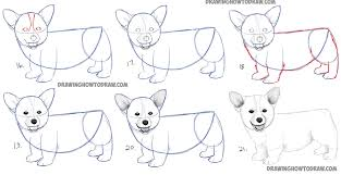 realistic dog drawing step by step. Brilliant Drawing Easy Pictures To Draw Of Dogs How A Corgi Puppy Step By Throughout Realistic Dog Drawing By O