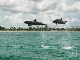 Double Flying Dolphins Photograph by Jodie Sims