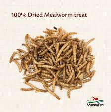 Mealworm Size Chart Manna Pro Mealworm Munchies
