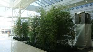 greenery office interiors. Jamiesonplacebambooinstall Greenery Office Interiors O