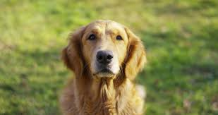 10 signs your dog may have cancer