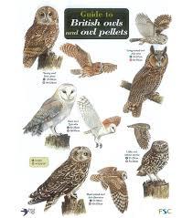 Fg20 Field Guide Owls Owl Pellets