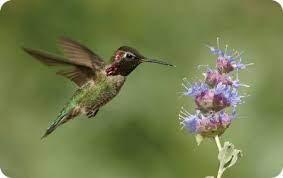 Summer Bird Feeding - Wild Birds Unlimited | Wild Birds Unlimited