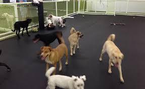 doggie daycare floor cleaners floor sealers floor sealants cleanbreak de
