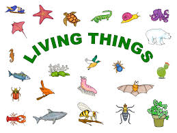 Image result for living things clip art