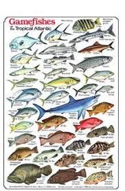 Oahu Fish Chart Hawaiian Fish Id Chart Game Fish Of The Tropical Atlantic