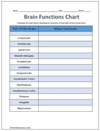 Parts And Functions Of The Brain Labeling Worksheet Science