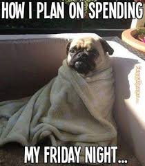 FunnyMemes.com • Cute memes - [How I plan on spending my Friday night] via Relatably.com