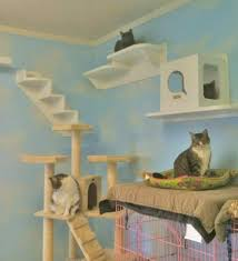 honestly it took me longer than i thought to find that photo there are some cool cat rooms posted but most of them are ways that people have