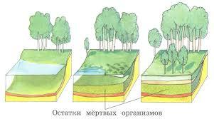 Причины изменения и смен экосистем Нарушение и сохранение  Однако и на цветущем лугу круговорот остаётся незамкнутым Со временем луг начинает зарастать кустарниками Почва его уплотняется и здесь поселяются