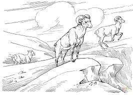 Small Picture Bighorn Wild Sheep coloring page Free Printable Coloring Pages