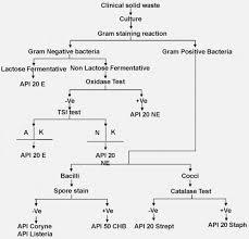 Csun Food Science Flow Chart Calamo Converging