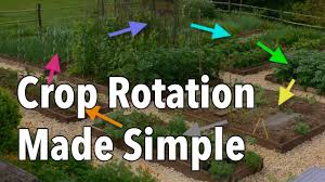 Crop Rotation Chart Vegetable Gardening How To Rotate Your Vegetable Crops The Old Farmers Almanac