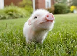 real baby farm animals.  Baby Baby Farm Animals And Real H