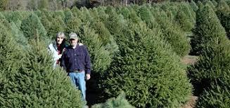 Northeast New Jersey Christmas Tree Farms Chooseandcut Christmas Tree Cutting Nj