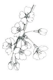 簡単お絵描き 桜 お絵描きなんて簡単