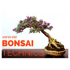 here is step by step process for simple rules and steps about how to make bonsai
