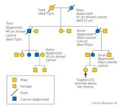 Genetic Family Tree Family History And Inherited Cancer Genes Cancer Research Uk