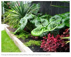 Small Picture tropical garden auckland Google Search garden inspiration