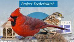 Online Bird Guide Bird ID Help Life History Bird Sounds From Backyard Bird Watch