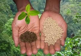 Պարարտացումը և նրա դերը բույսի կյանքում | minagro.am
