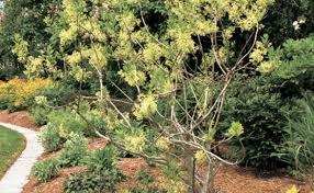 mulch for a healthy garden
