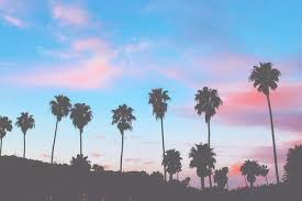 palm trees tumblr header. Wonderful Tumblr Palm Tree Header  Tumblr On Palm Trees Header