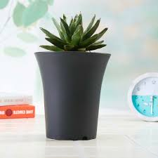 Modern Planter And Black Garden Pots Round Erineum Basin Indoor Kitchen  Planters Green Plant And Black Pot Plants Color Modern Indoor Pots For  Plants Ideas ...