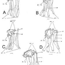 Pdf) Phylogeny And Zoogeography Of Laemonema...