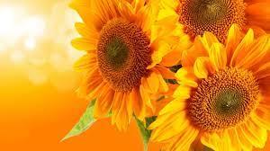 Whimsical Sunflower Desktop Wallpapers ...