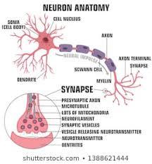 Neuron Vector Images Stock Photos Vectors Shutterstock
