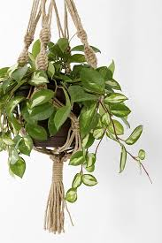 Slide View: 2: Magical Thinking Hand-Knotted Hanging Planter
