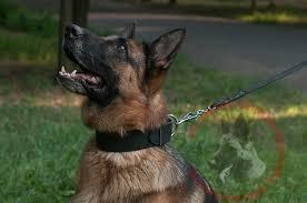 wide leather dog collar for german shepherd