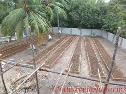 preparing raised garden beds