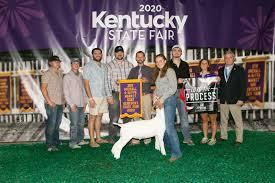 Kentucky State Fair | Market Goats | The Pulse