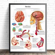 Human Organ Chart Human Organs Anatomy Chart Posters And Prints Canvas Art Decorative Wall Pictures For Living Room Home Decor Unframed Painting