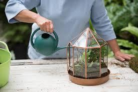 how to water a terrarium