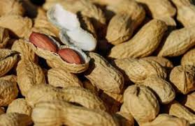 There Might Soon Be a Drug to Treat Peanut Allergies – Futurism