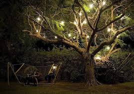 outdoor tree lighting ideas. Landscape Tree Lighting Newsonair With Regard To Ucwords Outdoor Lanterns For Trees Ideas