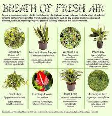 clean air plants indoor gardens